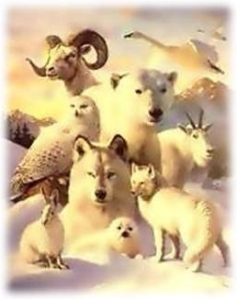 Animal Totem Spirit